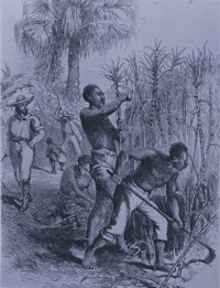 The varieties of slave labor freedom 39 s story for African crops and slave cuisine