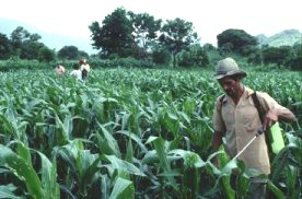 agriculture problems suggestions Problems & issues in adoption of biofertilizers in agriculture by farmers.