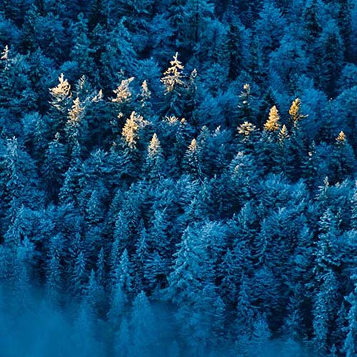 blue-forest-500sq